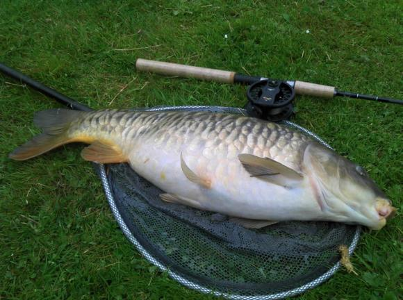 Jim Pike - Common Carp - 18lb - 15/5/11 - Whilst fishing M & B fishery (Hazard) 100%